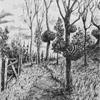 Сон - Камни на деревьях